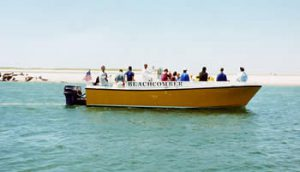 Beachcombers seal tours